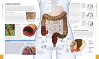 184-185_Large_Intestine